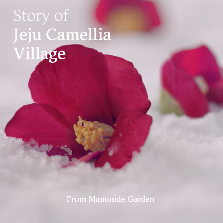 Story of Jeju Camellia Village