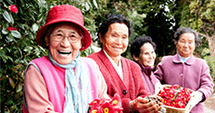 Grandmothers of Jeju camellia village smiling